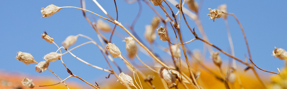 slider_macroflowers_960px